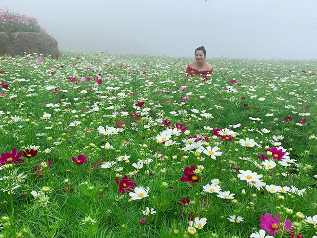 Guests enjoy checking in Sao Nhap flower fields are blooming in Sa Pa, Lao Cai
