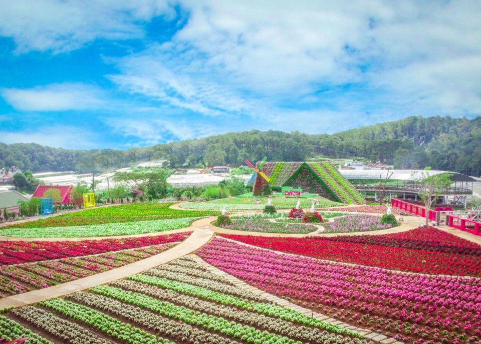 The 8th Dalat Flower Festival - 2019 has many new interesting things