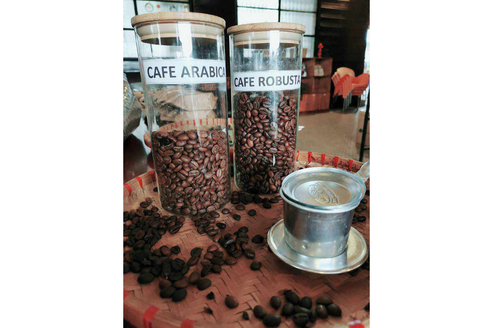 Cafe Arabica, Cafe Robust