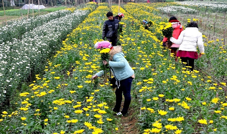 Getting lost in the region of flowers with V-Vietnam